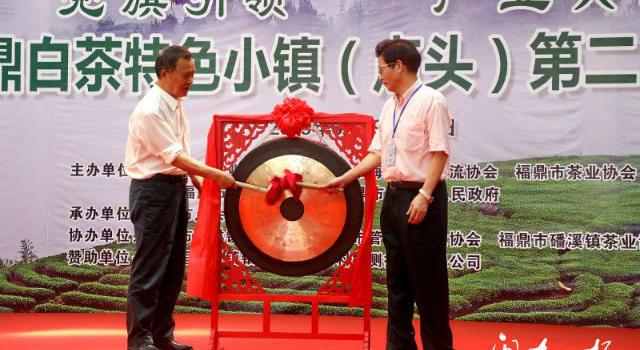 """好白茶是""""斗""""出来的,福鼎点头举办第二届民间斗茶赛"""