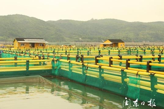 福鼎:渔排整治成果可见 海上田园可期