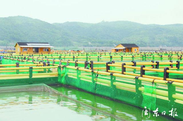 福鼎:海上养殖综合整治 海域环境持续改善