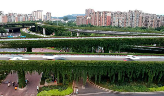 """福建福州:立交橋穿""""綠衣""""成街頭一景"""