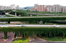 """福州尤溪州桥头立交桥穿""""绿衣"""" 成街头一景"""