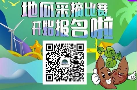 """漳浦首屆""""六鰲地瓜""""豐收節采摘比賽報名啟動"""
