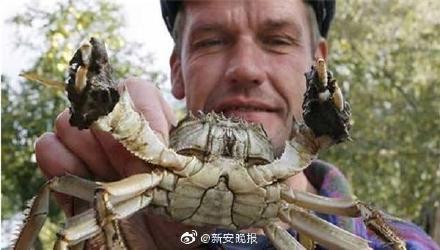 大闸蟹再成美国通缉犯!入侵纽约哈德逊河 威胁水域生态环境