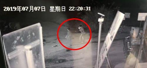 杭州失联女童最新消息找到人了吗?杭州女童失踪完整始末时间线曝光
