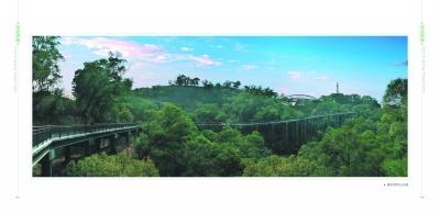"""福州:15亿棵乔木撑起绿色""""遮阳伞"""""""