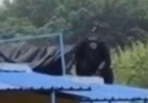 合肥大猩猩出逃现场图曝光 合肥大猩猩是怎么出逃动物园的详细经过