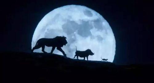 獅子王只有一個鏡頭是實拍真的嗎?真人版獅子王哪個鏡頭是實拍的