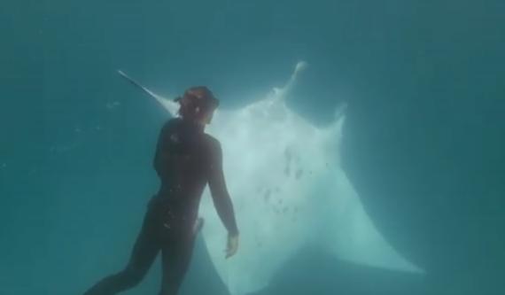 潜水遇魔鬼鱼求助怎么回事 遇到魔鬼鱼该怎么做