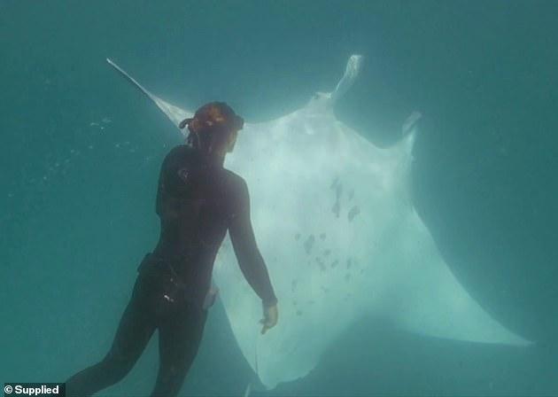 海洋惊魂:大魔鬼鱼被鱼钩钩住眼睛,竟扑向潜水摄影队员乞求救命