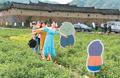 首届两岸花生节在福州举行 闽台农业交流开花结果