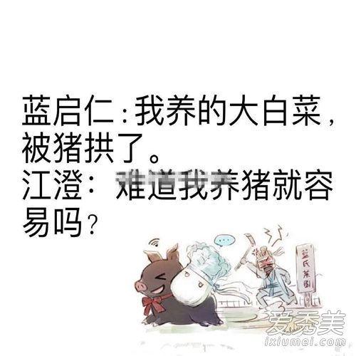 陈情令猪和大白菜什么梗什么意思 蓝家一共几颗白菜被拱了?
