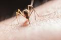 从3000万人感染到零感染:中国即将彻底消除疟疾
