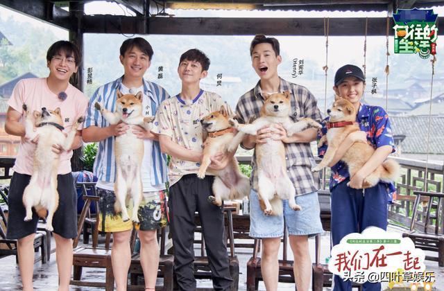 张子枫抱狗姿势什么梗?一下子就能看出直男跟妹子的区别在那边