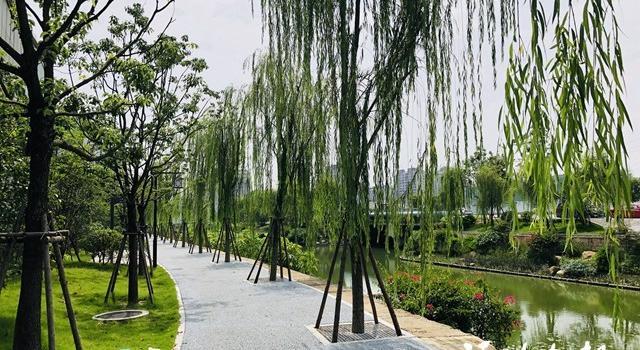福州:城峰路旁建成超1公里长串珠公园