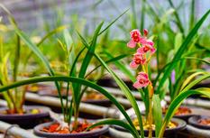 第三十届中国兰花博览会将于明年在漳州南靖举办
