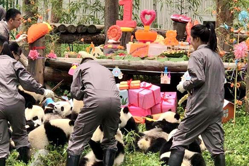 2018年出生的18只大熊貓幼仔集體過生日