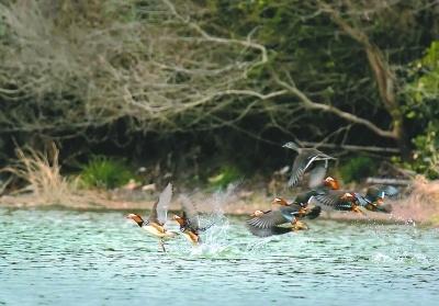 福建诞生首个省级湿地公园 福建鸣溪省级湿地公园通过评审