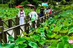武夷山五夫镇举办荷花节 有效推动乡村振兴