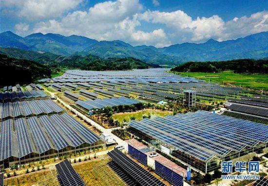 南平政和:现代光伏农业助力山区农民脱贫致富