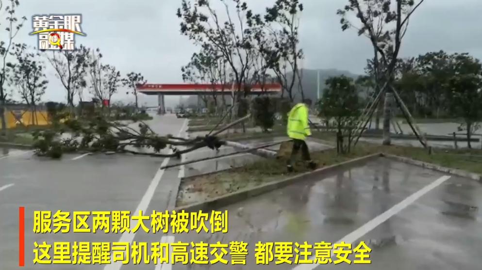 台風利奇馬最新消息 上海10萬多人撤離 台風利奇馬結束時間及最新路徑圖