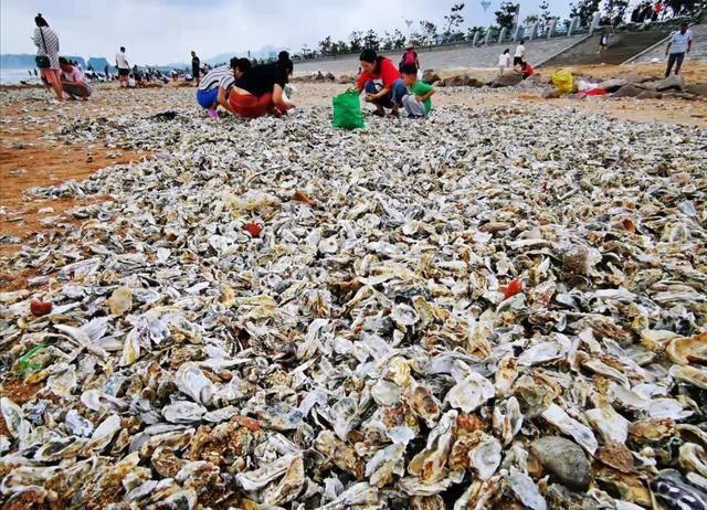 青岛市民捡海鲜详细新闻介绍?青岛市民捡海鲜现场图,利奇马走了吗?