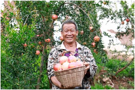 """拼多多联手500农产区上线""""农货节"""" 携4亿消费者推动全国尖货上行"""