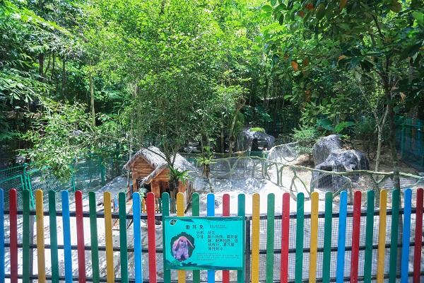 呀诺达雨林萌宠科普乐园正式开放 近30种萌宠集体亮相