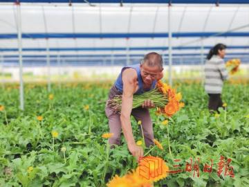 三明宁化县:发挥区位优势 打造花卉基地