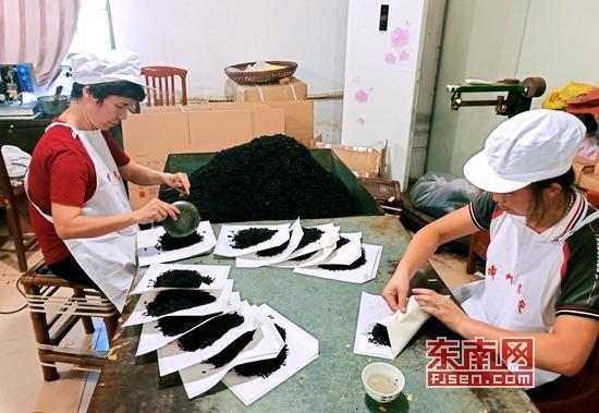 漳州茶厂用对峙守住百年乌龙茶的建造工艺