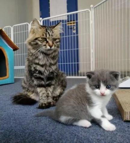 我国首只克隆猫诞生 名字很呆萌!