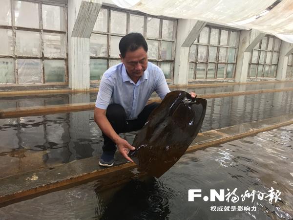 福州市年产海带苗150亿株 产值近亿元