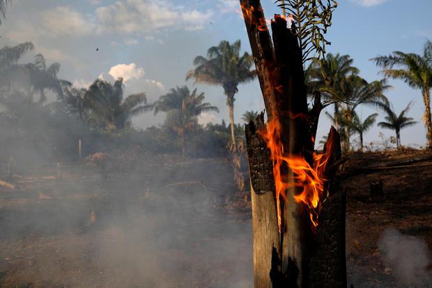 亚马逊雨林大火原因是什么?亚马逊雨林为什么会发生大火?