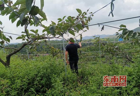 """80后台湾青年""""跨海""""来莆当起农场主"""