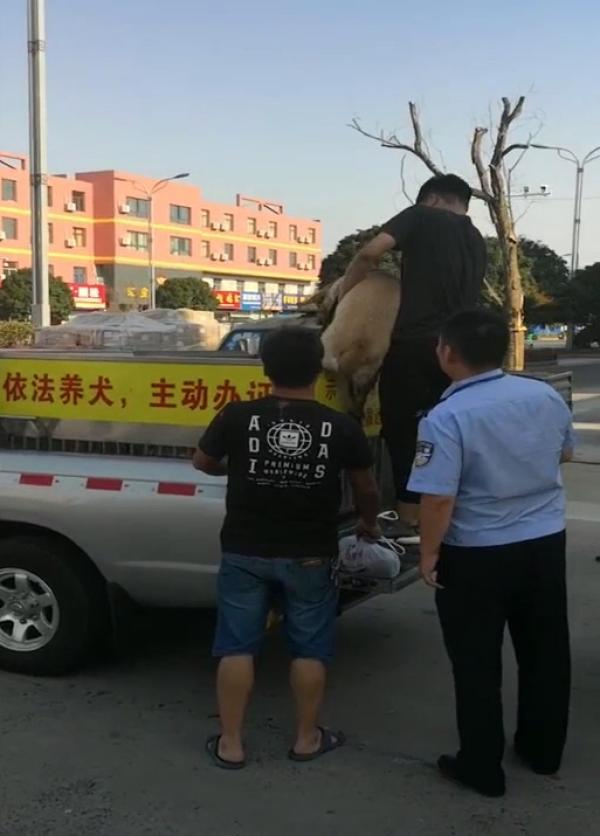 两条未牵绳的犬只街头咬伤一家三口,狗被吊销狗证主人被刑拘