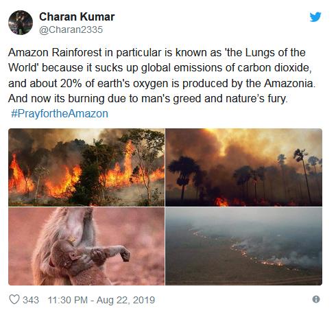 母猴痛哭照片走红怎么回事 亚马孙热带雨林大火母猴抱着孩子痛哭