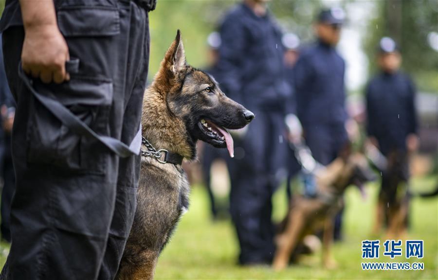 首只警用克隆犬顺利通过考核 正式入警