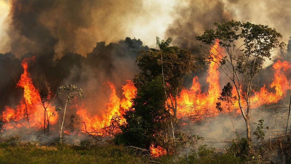 亚马逊雨林大火连烧3周 网友喊话亚马逊CEO贝佐斯去救火
