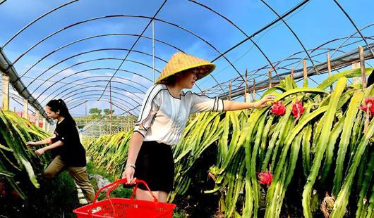 福建武夷山:发展特色产业 助推乡村振兴