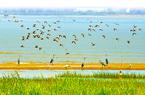闽江河口湿地系统推进生态保护修复 打造鸟的天堂