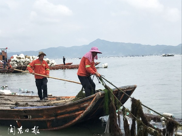 寧德霞浦縣開展官井洋大黃魚海洋生態保護禁養區清理整治統一行動
