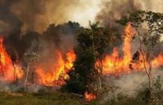 亚马逊雨林烧了3个星期