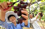 南平建阳:农旅融合 助推乡村振兴