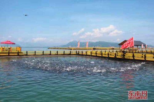 宁德海上养殖综治见成效:海清水净鱼更肥