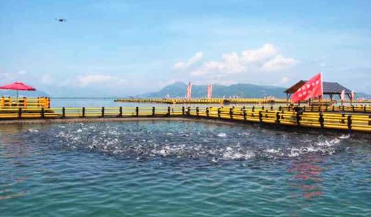 宁德海上养殖综治见成效:海清 水净 鱼更肥
