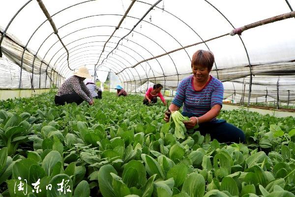 寧德市夏播農作物總播種面積同比增長0.2%