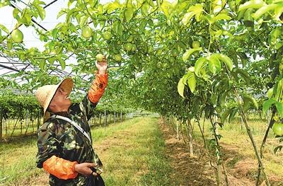 南平:农产品极大丰富 日均产量大增