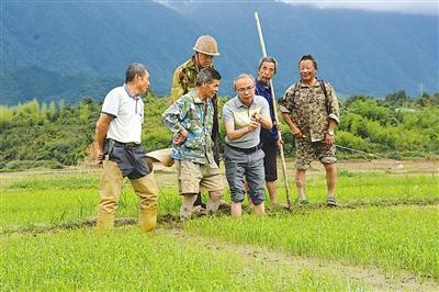 南平光泽县种子管理站工作人员指导粮农制种