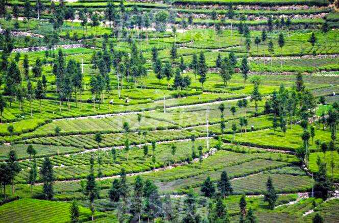 退耕还林还草工程实施20年 助绿中国版图