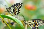 福州首家蝴蝶研学基地开园啦!就在永泰!