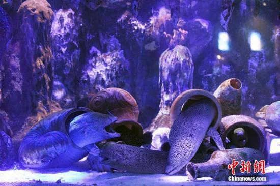 尼斯湖水怪到底是什么东西大揭秘 尼斯湖水怪可能是巨型鳗鱼